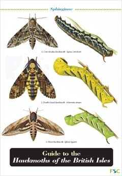 Laminated Field Guide HAWKMOTHS - Moths, Caterpillars
