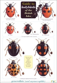 Laminated Field Guide LADYBIRDS