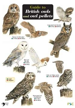 Laminated Field Guide - Owls & Owl Pellets