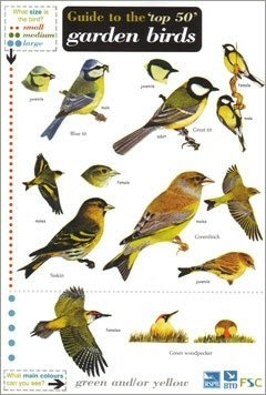 Laminated Field Guide Top 50 British Garden Birds Broadoak