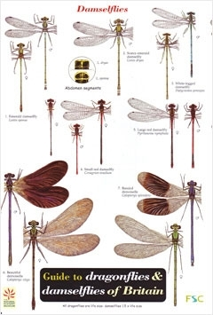 Laminated Field Guide DRAGONFLIES & DAMSELFLIES - Dragonfly