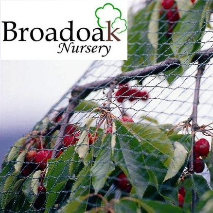 Fruit Netting Heavy Duty by the Metre (Bird, Crop, Pond Protection)