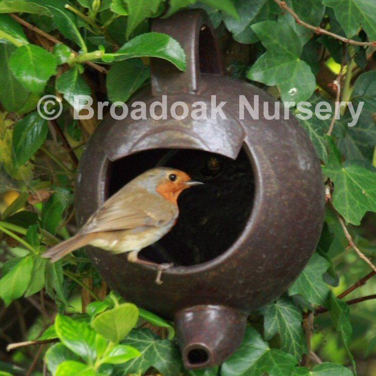 Robin Teapot Nester Ceramic Nest Box Garden Birds Broadoak