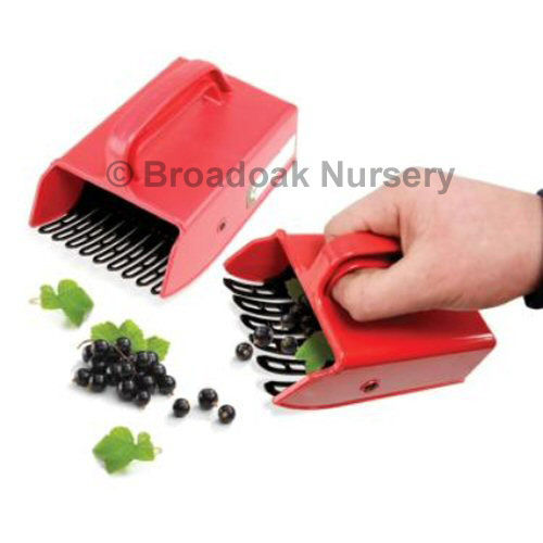 Berry Pickers 1 Large & 1 Small - Quick & Easy Fruit Picking, Harvesting