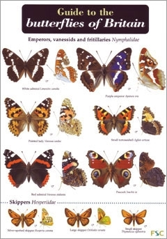 Laminated Field Guide BUTTERFLIES - Butterfly Guide