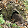 Hogitat Hedgehog House / Home, Small Mammal Nest / Habitat