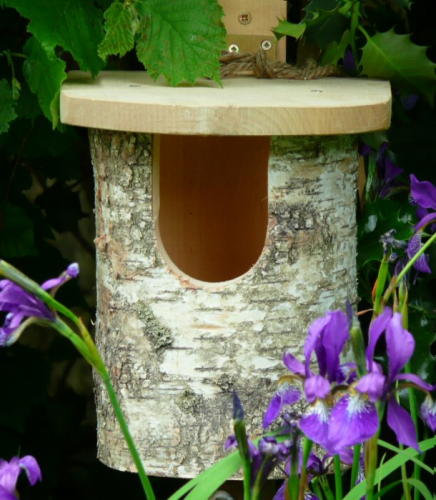 Natural Silver Birch Log Nest Box For Robins - Hardwood