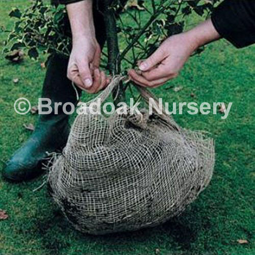 Natural Jute Hessian Fabric for Frost Protection & Rootballing