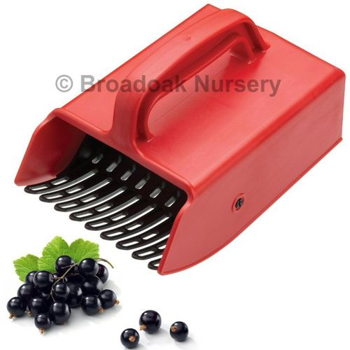 Berry Picker - Small - for Quick & Easy Fruit Picking, Harvesting