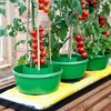 3 Plant Halos, Watering & Support Solution for Grow Bags, Raised Beds