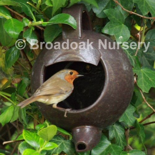Robin Teapot Nester - Ceramic Nest Box for Garden Birds