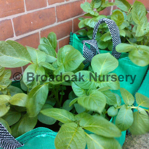 1 Potato Planting Bag, Vegetable Planter, Grow Bag, Tub, Patio Planter