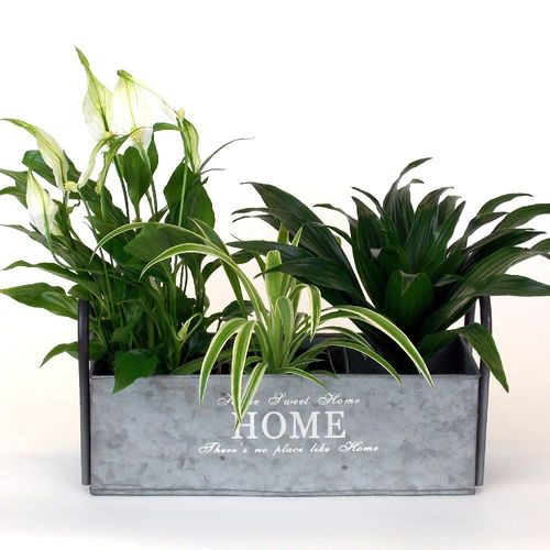 Brushed Zinc 3 Bay Planter - Metal Planter, Indoor or Garden Use