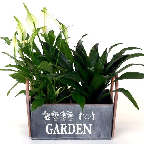 Brushed Zinc 2 Bay Metal Planter, Indoor or Garden Use
