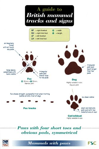 Laminated Field Guide BRITISH MAMMAL TRACKS & SIGNS