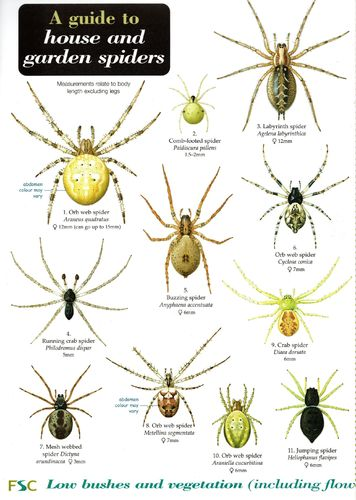 Laminated Field Guide HOUSE AND GARDEN SPIDERS