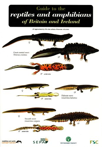 Laminated Field Guide BRITISH REPTILES AND AMPHIBIANS