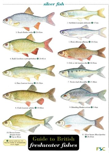 Laminated Field Guide FRESHWATER FISHES